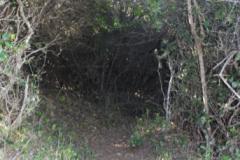 Bush-path-1