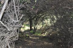 Bush-path-2