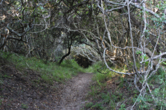 Bush-path-3
